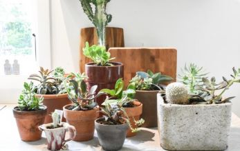 Top houseplant care tips